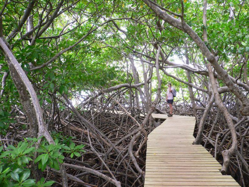 Presqu'île de la Caravelle, Martinique