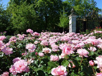 Queen Mary's Gardens, Londres