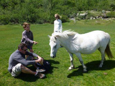 chevaux sauvages au Lac de Nino, Corse