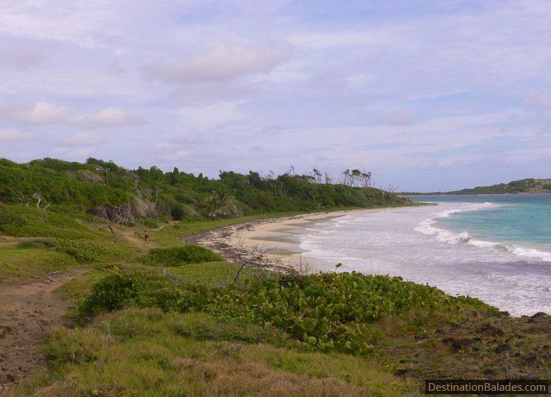 la savane de pétrification, Martinique