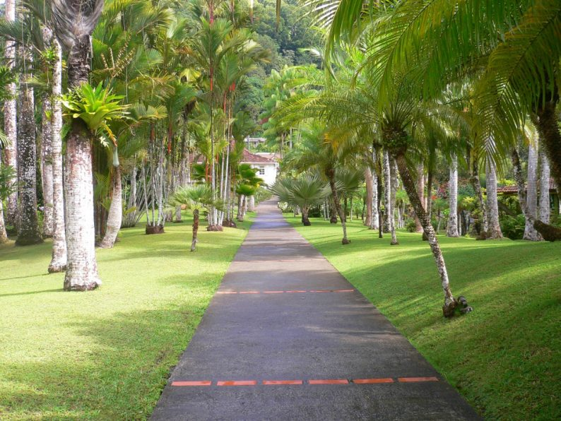 les jardins de Balata, Martinique