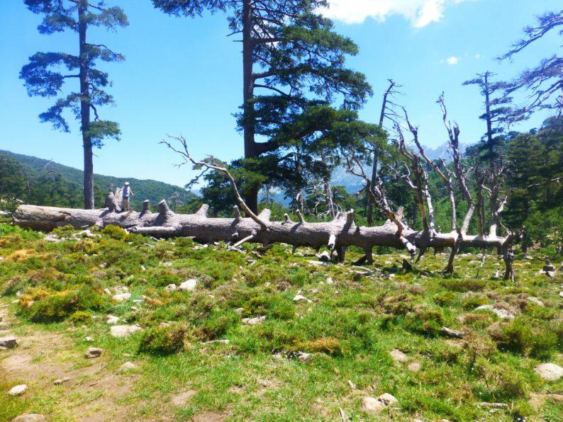 Rando Cascades de Radule, Corse