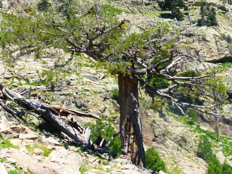 Rando Cascades de Radule