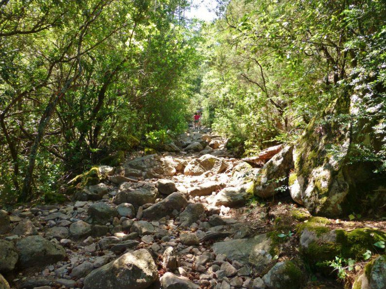 rando forêt de Bonifato, Corse