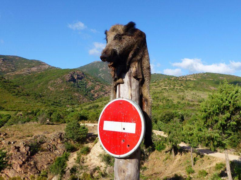 vallée du Fango, Corse