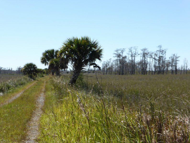 Big Cypress National Preserve, Floride