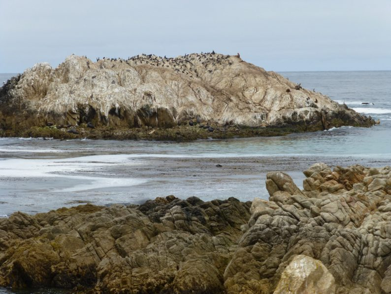 Bird Rock 17-Mile Drive