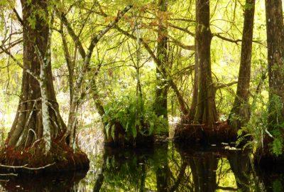 Bird Rookery Swamp Trail Floride