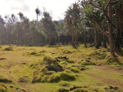 Cap Méchant, île de la Réunion