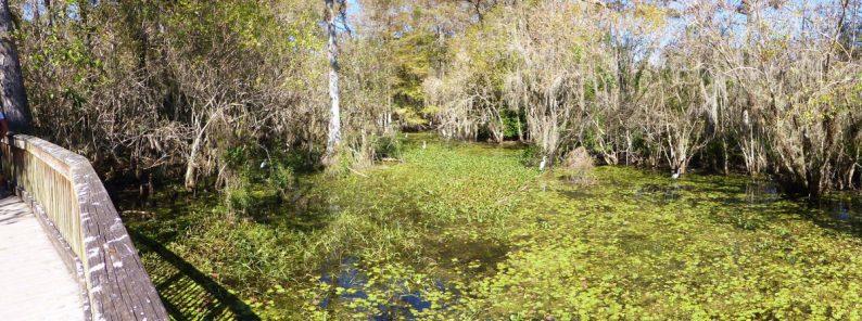 Kirby Storter Boardwalk, Big Cypress National Preserve, Floride (2)