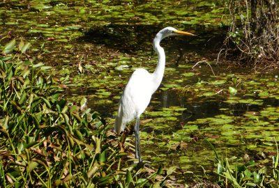 Kirby Storter Boardwalk, Big Cypress National Preserve, Floride