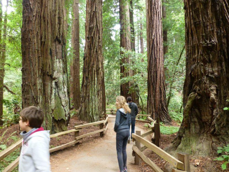 Muir Woods Californie