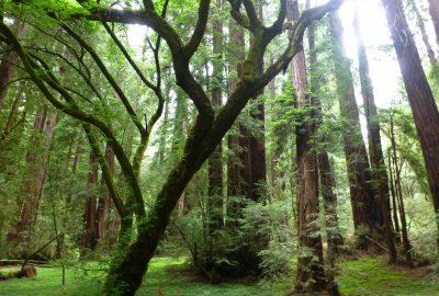 Muir Woods National Monument en Californie