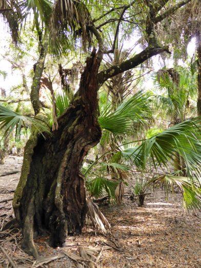 Myakka River State Park, Sarasota