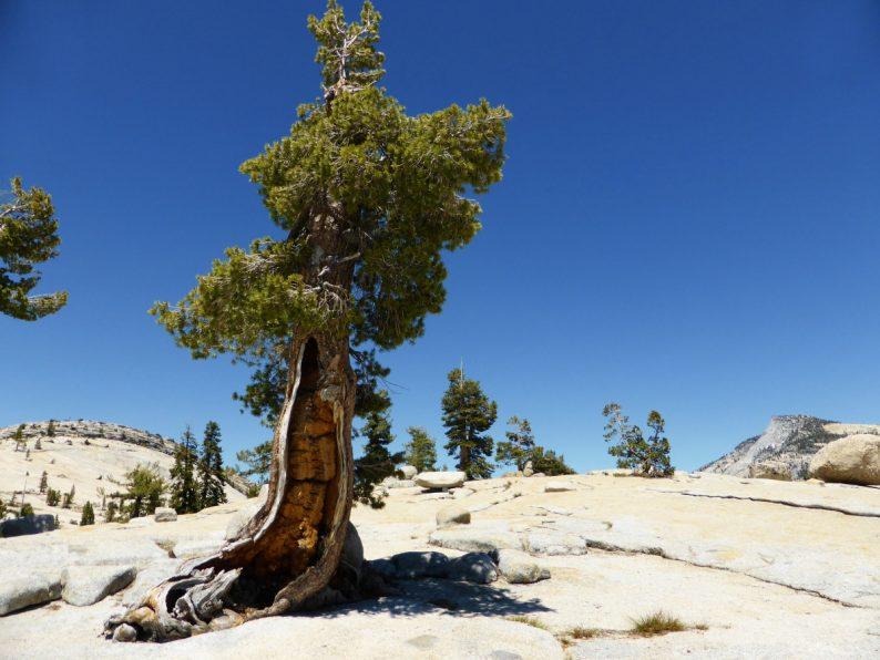 Olmsted Point, Yosemite Californie