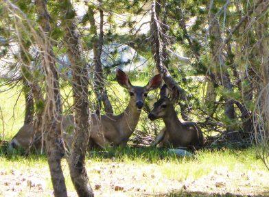 Tuolumne Meadows, Yosemite Californie