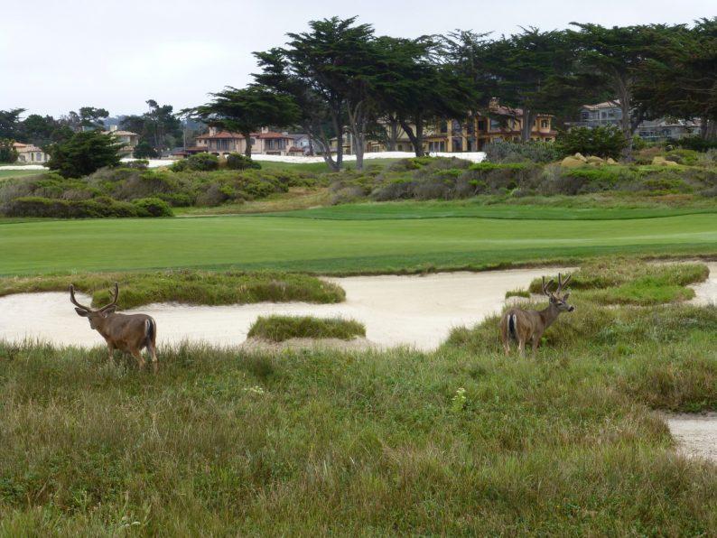 cerf 17 Mile Drive Monterey