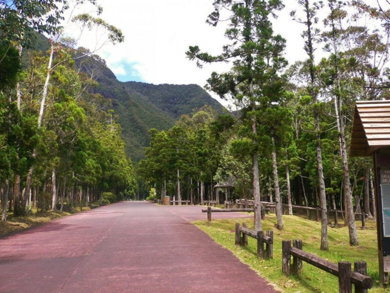 forêt de Bébour- île de la Réunion