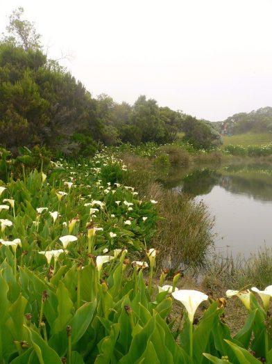rando piton de l'eau, île de la Réunion