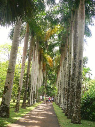 le jardin de Pamplemousses l'île Maurice