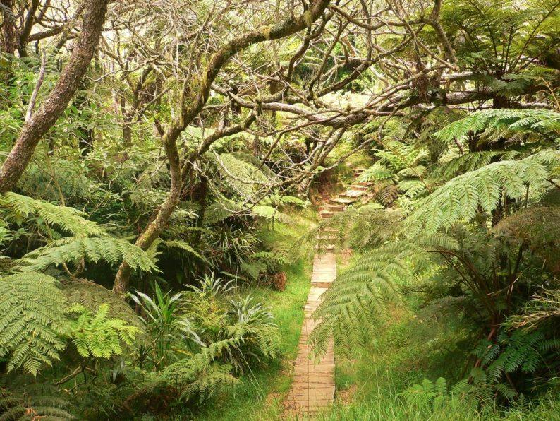 rando le Trou de Fer, île de la Réunion