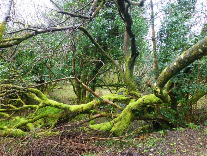 Parc National du Connemara, Irlande