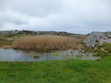 Dogs Bay, Irlande