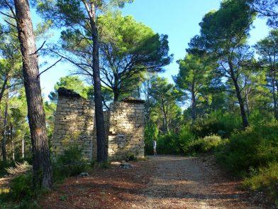 forêt de pins, Luberon