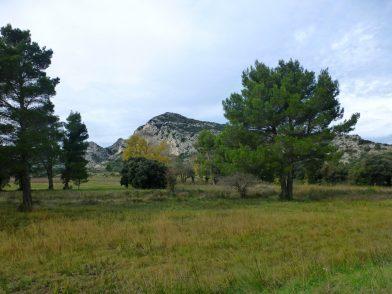 Parc naturel régional des Alpilles