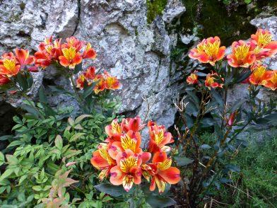fleurs au jardin exotique d'Eze