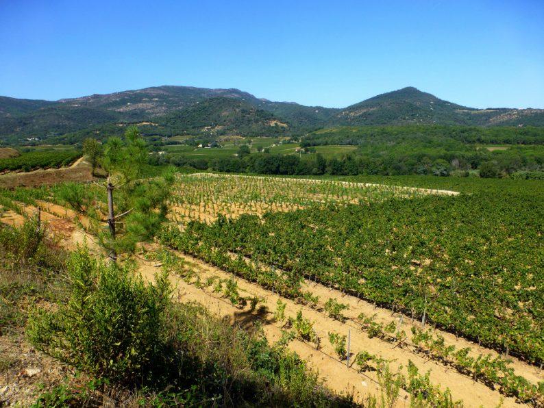vue sur les vignes près de Grimaud, Var