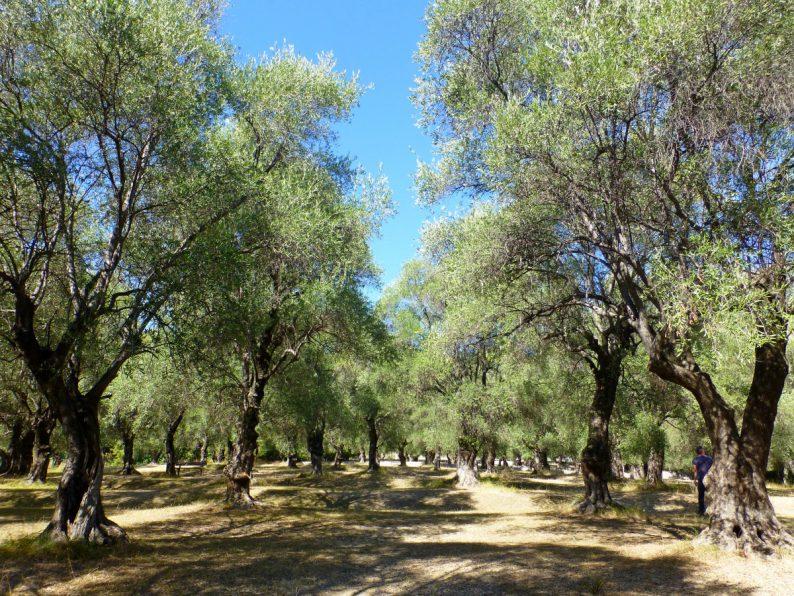 Le parc du Pian, Menton
